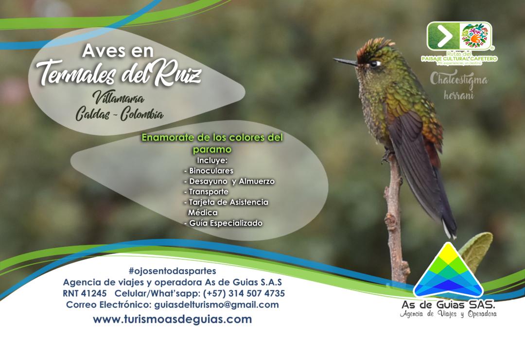 Aves en el Termales del Ruiz